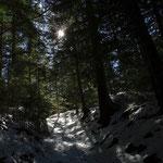 22.03.2021 - welch Überraschung, ich bin wieder im Wald auf dem Weg hinauf auf die Wildwiese.....
