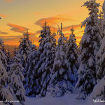 ....hat schon was so eine Morgenstimmung im Winterwald.....