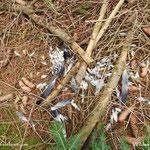 ...dieser Vogel hatte scheinbar einen gewaltigen Fehlstart hingelegt.........