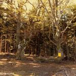 ...weiter geht es, vorbei an bizarren Baumskulpturen...