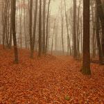 im Wald am Weg nach Maierhofen