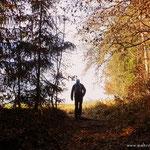 am Weg durch den Hofwald