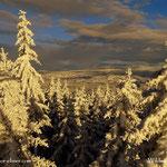 ...in einen schönen Winterwald....