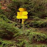 ....am Weg 7, entlang einer schönen Forststraße gelange ich zum......