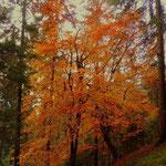 ....ja der Herbst, die bunten Bäume, eine tolle Jahreszeit....