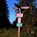 """....nach einer """"eintönigen"""" Forststraßenwanderung gelangt man auf den Waldhüttsattel (1266 m)..."""