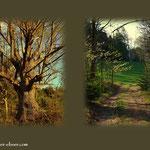 ...es geht vorbei an stattlichen Linden und über schöne Wanderwege....