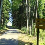 mein weiterer Weg zur Hubertushöhe und Kernstockwarte über den Karolinenweg Nr. 3