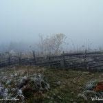 12.11.2020 - Der Morgenreif und der Nebel ist in den letzten Tagen intensiver geworden....