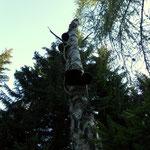 """ein """"Pilzbaum"""""""
