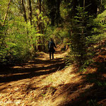 ...der Weg, hier in Schachen, führt durch schöne Wälder....