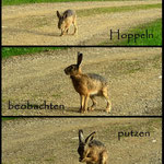 ....den Hoppelhasen, der da so gemütlich die Straße entlang hoppelt....