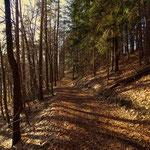 ....mein Weg führt mich nun über schöne Wanderwege......