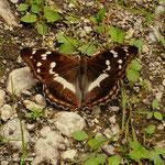 ein schöner Schmetterling konnte eingefangen werden.