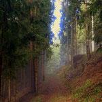....bringen mich entlang am Almenland Panoramaweg.....