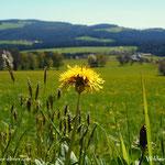 .....Blick über die Wiesen im Joglland....