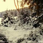 19.01.2021 - Ein kurzer Erfrischungsspaziergang durch den nahen Winterwald.