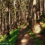 ....ein schöner Pilgerweg zum Niederalpl. Hier den Entschluss gefasst über die Lieglergräben und Fallenstein nach Mariazell zu pilgern