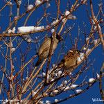 ...die Vögel genießen die Morgensonne, muss noch Vogelfutter ins Häuschen geben.