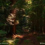 ....dieser Wanderweg durch den Wald ist auch nicht zu verachten, einfach schön.