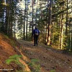 """...es geht über einen schönen Forstweg hinauf in Richtung """"Reithbauer""""...."""