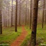 ....ein wenig tiefer, im Wald unter dem Nebel eine klare und frische Luft, perfekt.
