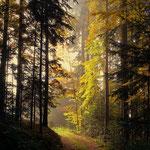 ...schöner Waldweg, kurz vor Gschaid bei Birkfeld....