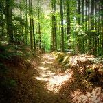 der Abstieg nach Hartberg, durch die Brühl