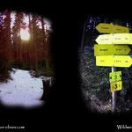....noch eine kleine Wanderung durch den nahen Wald....