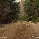 ....so trottete dieser Fuchs, in Gedanken versunken, auf mich zu, bis ihm ein Licht aufging, upps da kommt einer, ein Steirer.....