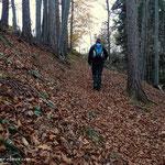 ...es geht durch den Buchwald und über ein großes Feld....