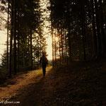 durch den Wald geht es hinaus.....