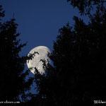 03.03.2021 - noch erwischt, den Mond, jetzt bei 85,1% und abnehmend.....