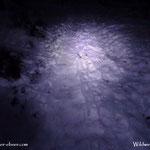 21.12.2020 - Im Schein der Stirnlampe geht es hinauf auf die Wildwiese.....
