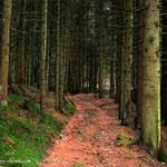 ....ein schöner Waldweg, führt entlang eines Baches welchen man etwas später.....