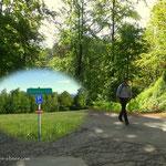 kurz vor der Remschnigg Alm kommt man zwar noch einmal auf eine Asphaltstraße, jedoch nur kurz.