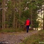 """17.11.2020 - Tag 1 im verschärften """"Lockdown"""", bin jedoch ganz alleine im Wald....."""