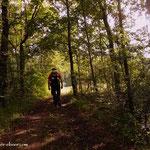 ...durch einen Wald, nach Pyburg....