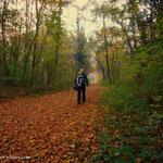 ....durch den Auwald, zurück zu meinem Begleiter.....