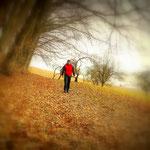 ...entlang am Waldrand, bis hinunter zum Poppendorferbach, welchen man folgt bis nach Poppendorf...