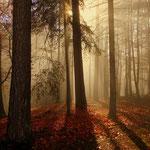 trotz allem, auch im Nebel kann man tolle Bilder machen