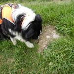 Zammy entdeckt einen wandernden Molch.