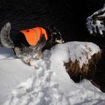 Absuchen eines Ufers im Schnee