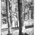 Erich Ludwig: Bäume