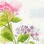 フリー素材・和風イラスト・貼り絵・あじさい・ピンク・紫