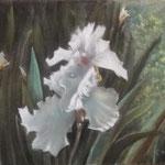 Lliri blanc - Guix sobre paper