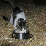 Hofkater ohne Namen, Katzenhilfe Yuma & Co, Nagold