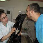 Hündin Fienchen, Gabis Tierschutz Antalya, Türkei