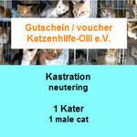 1 Katzer auf Malta, Katzenhilfe Olli eV