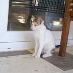 Katze Coco, TSV Gemeinsam für Tiere eV